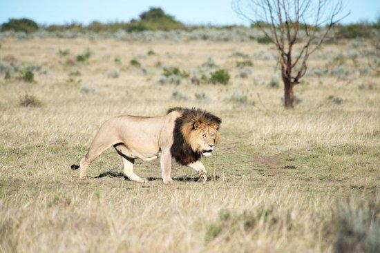Elela Africa