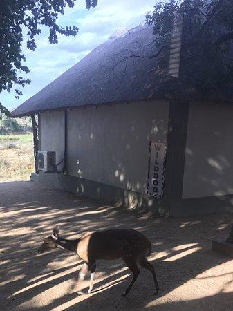 Umkumbe Safari Lodge-billede