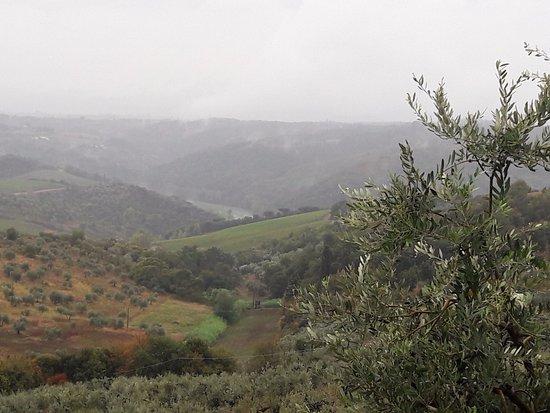 Artimino, Италия: Tuscan hills in rain