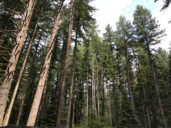 Sublimity, Oregón: Forest area in the park
