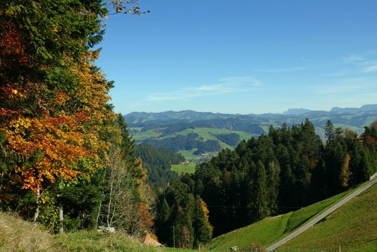 Emmenmatt, İsviçre: Goldener Herbst auf der Moosegg