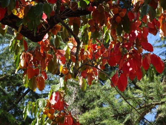 Peramola, إسبانيا: magnífico palosanto