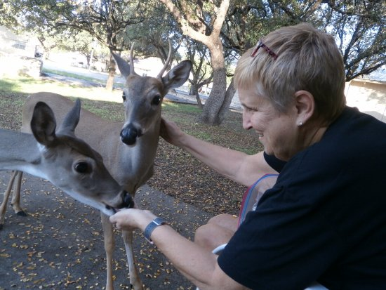 Lago Vista, TX: Feeding deer from our patio