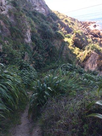 Napier, Nieuw-Zeeland: Cliff trail