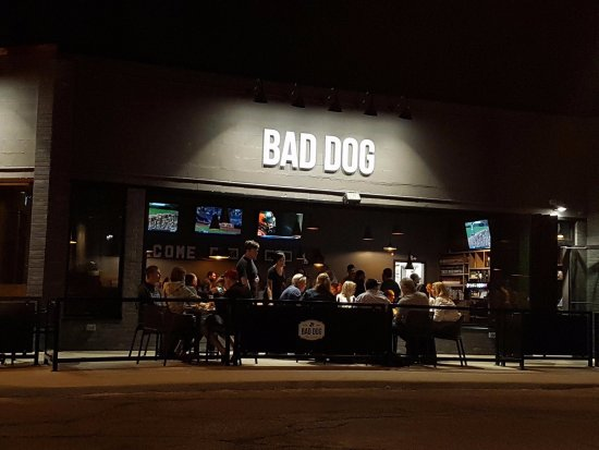 Bad Dog Sarnia a great choice inside or out!