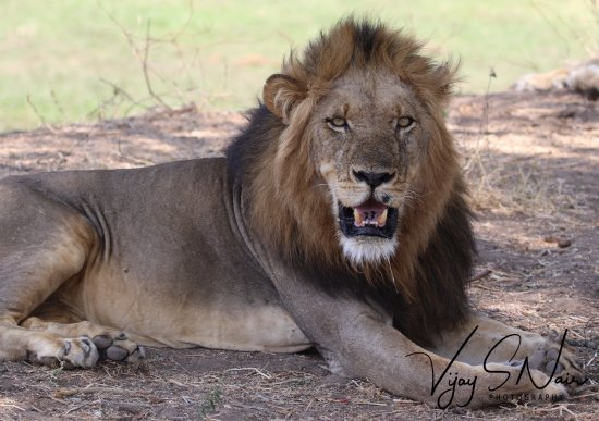 Lower Zambezi National Park, Zambia: Hi ... Nice to see you again