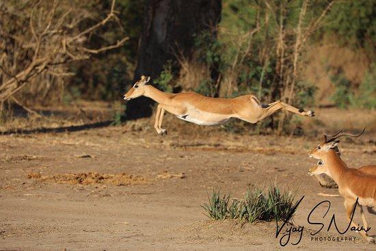 Lower Zambezi National Park, Zambia: Flying to save your life