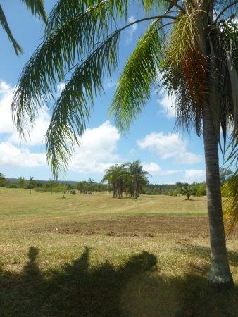 Kapaau, HI: Nice shade tree on the course