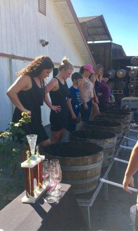 Sunce Winery: photo5.jpg