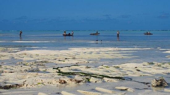 Makunduchi, แทนซาเนีย: Strand bei Ebbe