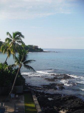 Kona Banyan Tree: Coastline and pool area