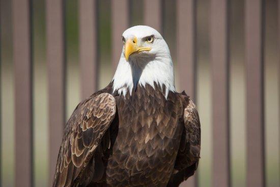 Shawnee, OK: Citizen Potawatomi Nation's Eagle Aviary
