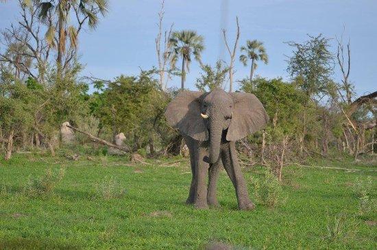 Hwange National Park, Zimbabwe: photo2.jpg