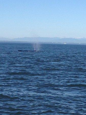 Anacortes, WA: Whales!