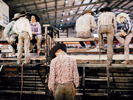 Rockhampton, Australia: FREE ENTRY | Practice Bull Riding every Wednesday and Friday Night