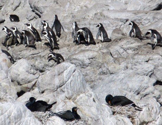 Betty's Bay, Republika Południowej Afryki: photo0.jpg