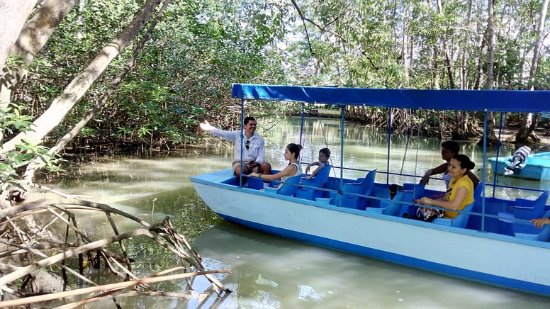 William Mangrove Tours
