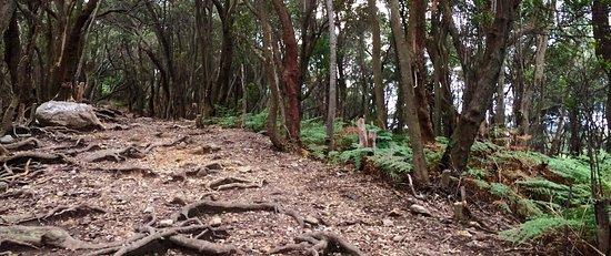 Ciwidey, إندونيسيا: Jalur menurun dari puncak gunung patuha menuju kawah putih