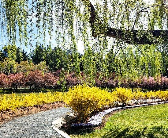 Sutton, Australia: Tulip Top Gardens