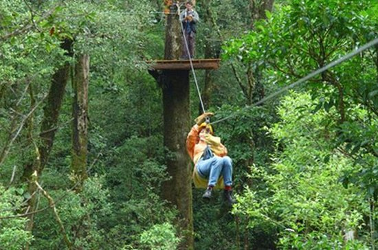 Canopy Tour from Puerto Viejo of...