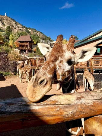 cheyenne mountain zoo colorado springs top tips before you go with photos tripadvisor. Black Bedroom Furniture Sets. Home Design Ideas