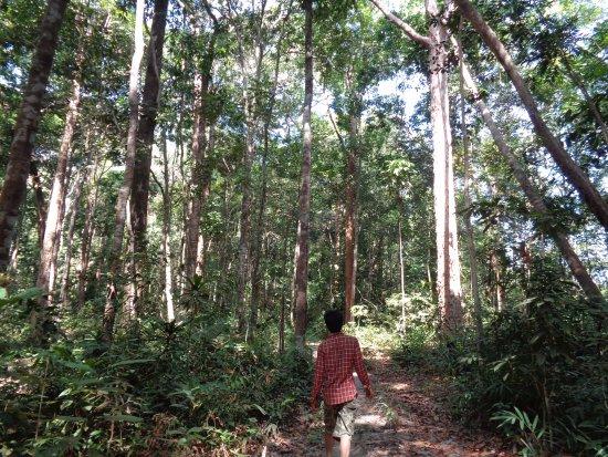 Banlung, Cambodia: Ratanakiri jungle trek , unique green jungle trekking tours