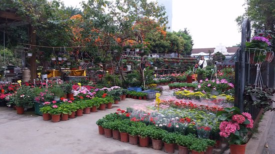 Shenzhen Flower Trade Market