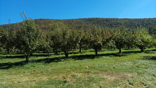East Dorset, VT: You like dem apples?