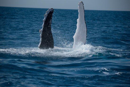 Hervey Bay, Australia: Photos from the boat.