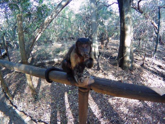 Hartbeespoort, แอฟริกาใต้: Rico the monkey
