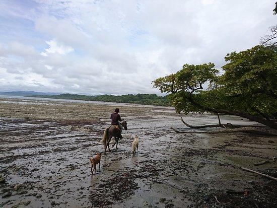 Mal Pais, Kostaryka: Premier galop