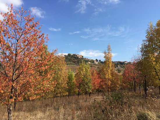 Cremolino, Italia: Surrounding hills in autumn