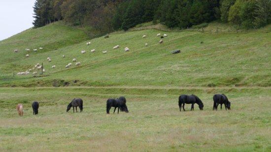 Kirkjubaejarklaustur صورة فوتوغرافية