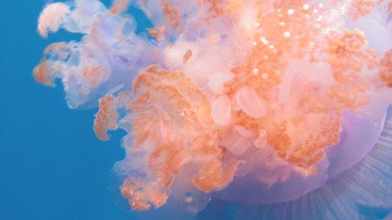 Diving Bluetribe Moofushi : meduza