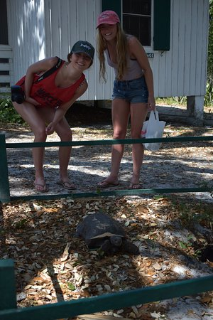 Captain Randys Fishy Business: Tortoise at Cabbage Key