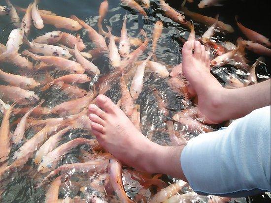 Balapitiya, Sri Lanka: Madu River Trip- Fish Spa