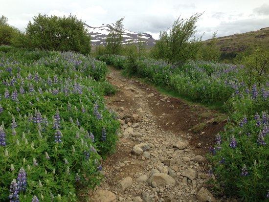 Akranes, Islandia: Track to Glymur Mountain