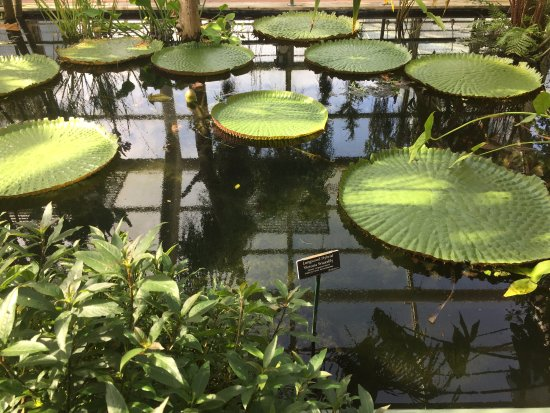 Tropical conservatory 3 different types to visit - Brooklyn botanical garden admission ...