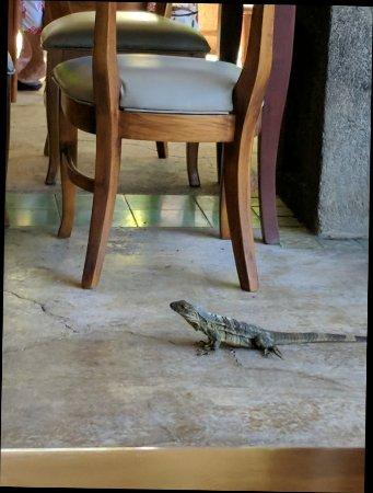 Playa Panama, Costa Rica: IMG_20171017_084909_large.jpg