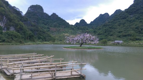 Yingde, China: the fake(?) peach blossom in the middle of the lake