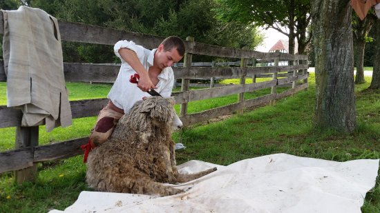 Staunton, VA: Sheep shearing every spring provided the raw materials for cloth spinning and weaving