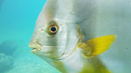 Saint-Leu, Reunion Island: poisson