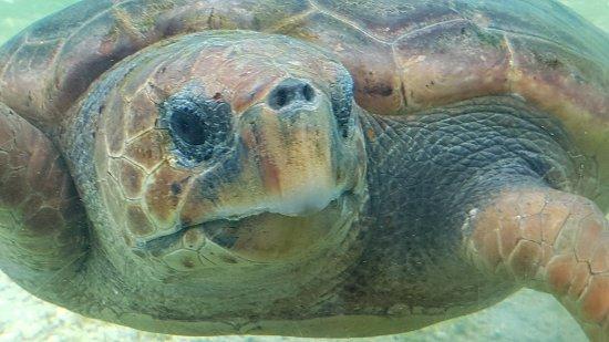 Saint-Leu, Reunion Island: tortue marine