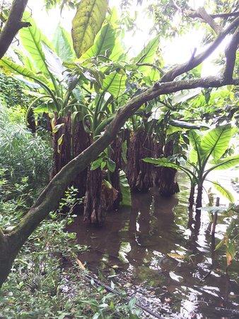 Hoomaluhia Botanical Gardens: photo1.jpg