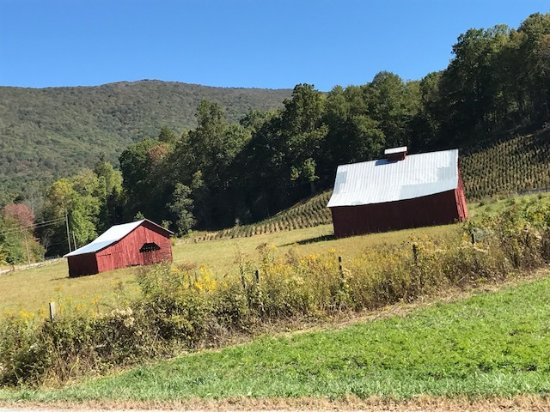 Creeper Trail Bike Rental: so much nature and Americana