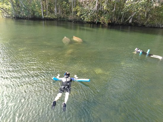 Snorkel With The Manatees: image000000_large.jpg