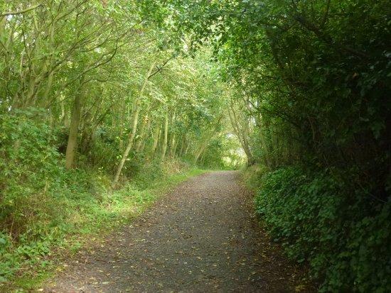 Amble, UK: sunny path