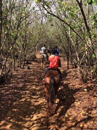 Koloa, Hawaï : nice trail in wood