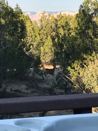 Stone Canyon Inn: View from our hot tub on our private deck... mule deer passing by