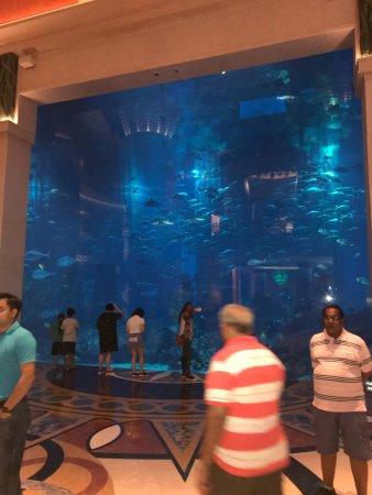 Atlantis, The Palm : photo1.jpg